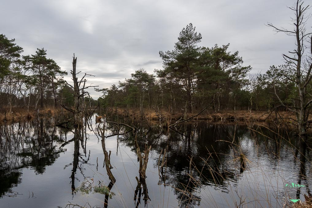 Naturschutzgebiet Hohes Moor bei Heinbockel - wir entdecken eine bizarre Landschaft