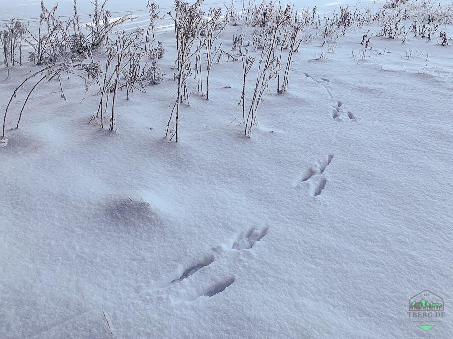 Rezension Fährten lesen und Spuren suchen - Hasenfährten im Schnee. Was erzählen sie uns?