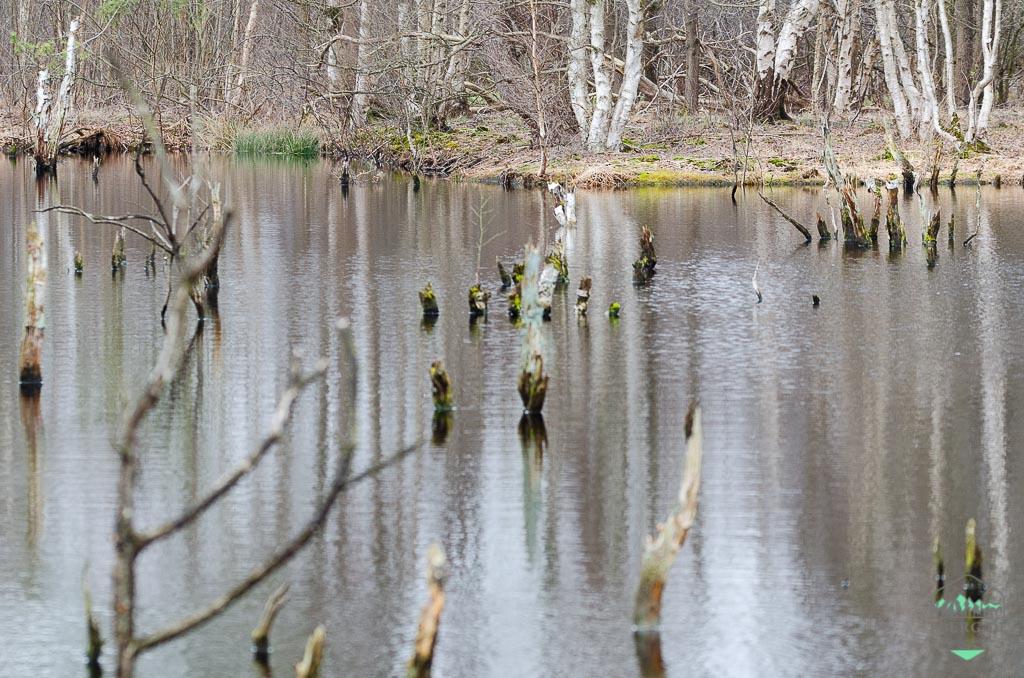Naturschutzgebiet Hohes Moor bei Heinbockel