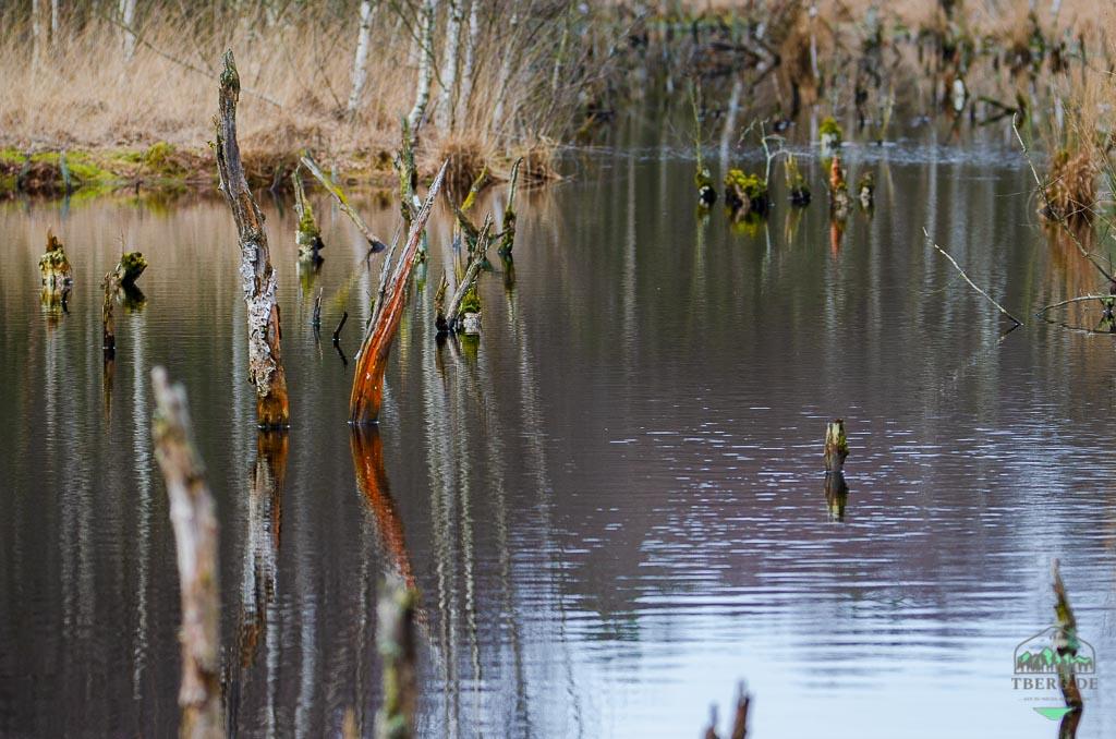 Naturschutzgebiet Hohes Moor bei Heinbockel - sterbende Birken sind gut für das Moor