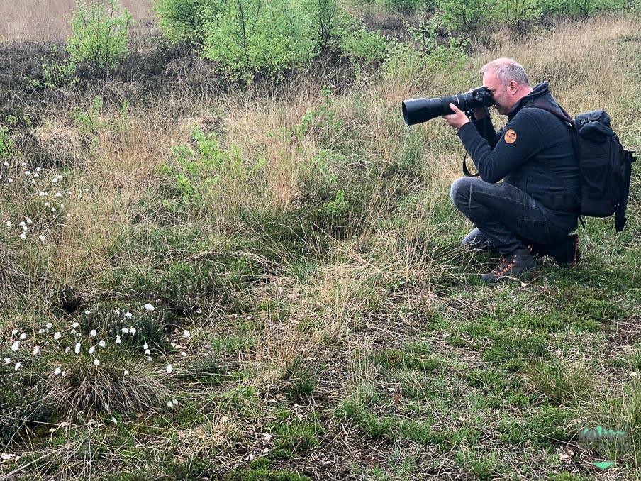 Exkursionen zur Wollgrasblüte im Moor (mit Foto-Tip) - meine Foto-Tipps
