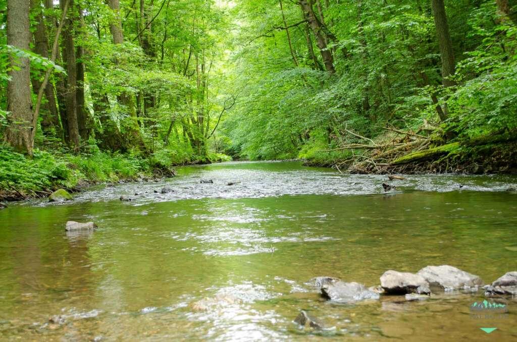 Harz oder Ostfriesland - Fische gibt es auch in den Harzflüssen wie der Selke