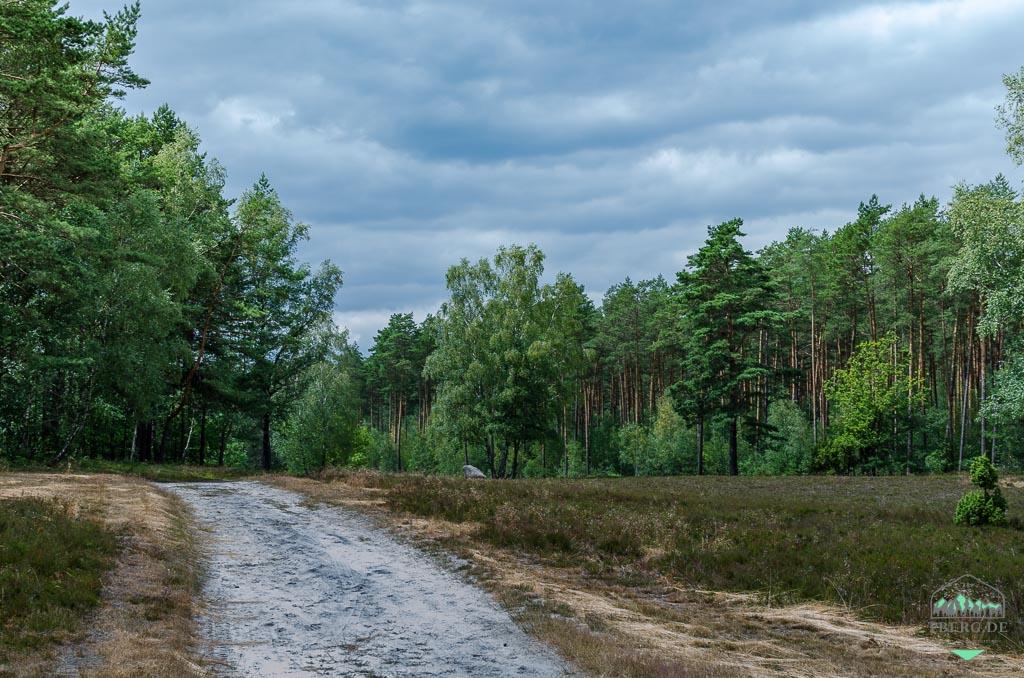 Naturerlebnisse in der Lüneburger Heide