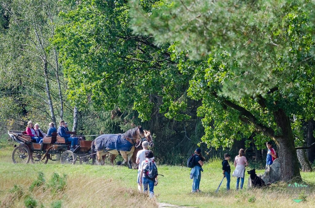 Naturerlebnisse in der Lüneburger Heide - zu Fuss aber auch zu Pferd kommt man hier vorwärts