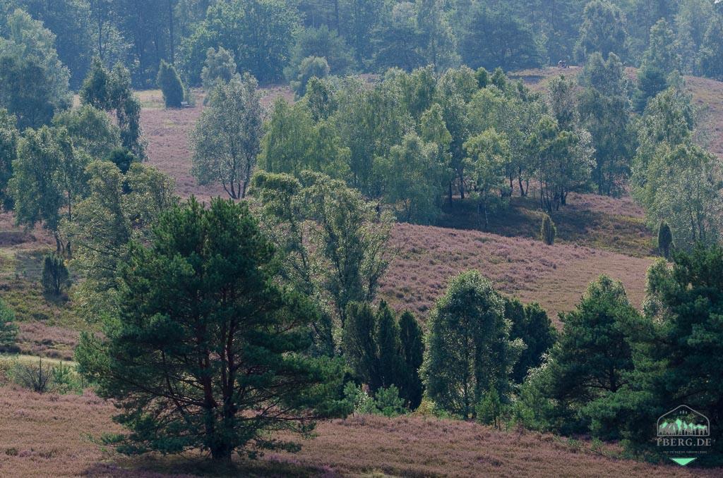 Naturerlebnisse in der Lüneburger Heide - eine uralte Landschaft kann man neu entdecken!