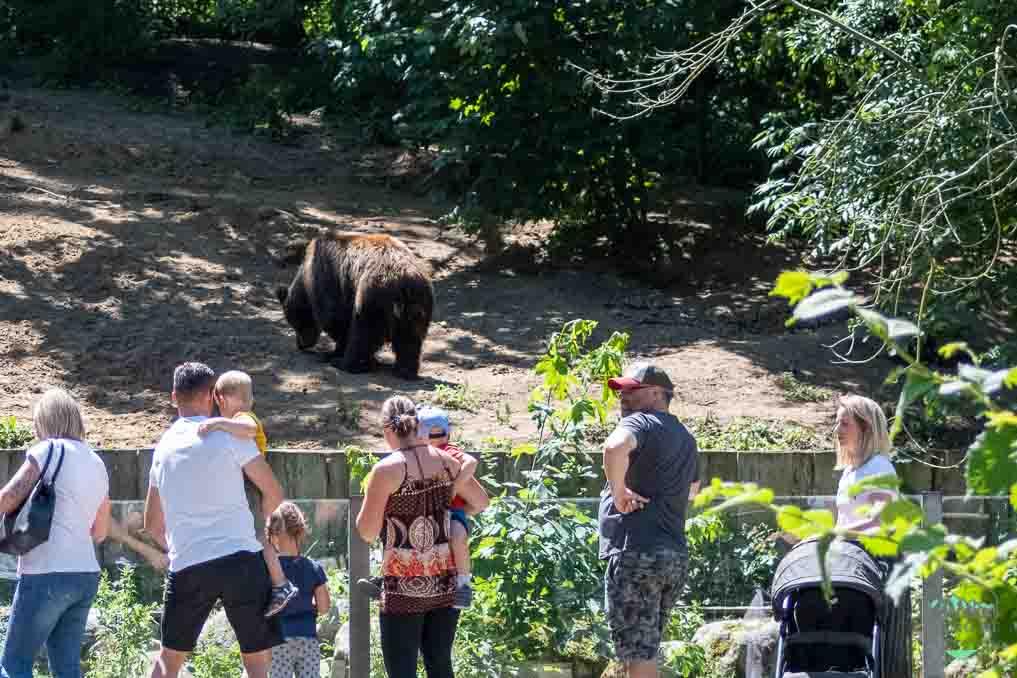 Besuch im Zoo Schwerin - Besucher an der grossen Freianlage für Braunbären