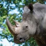 Zoo Schwerin - lohnt es sich?