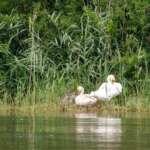Naturerlebnisse in der Lewitz
