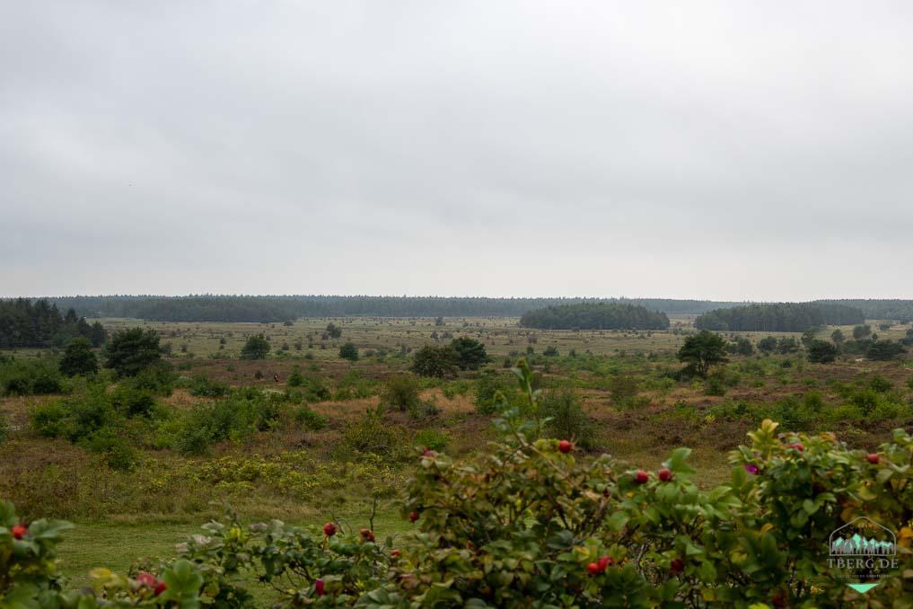 Koniks und Heckrinder in der Cuxhavener Küstenheide - Blick vom Feldherrenhügel auf die Heidelandschaft
