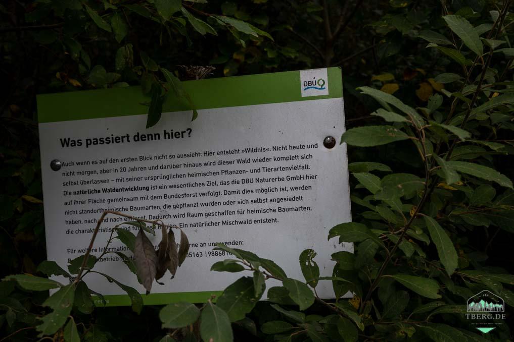 Koniks und Heckrinder in der Cuxhavener Küstenheide - das Gebiet wird von der Deutschen Bundesstiftung Umwelt betreut