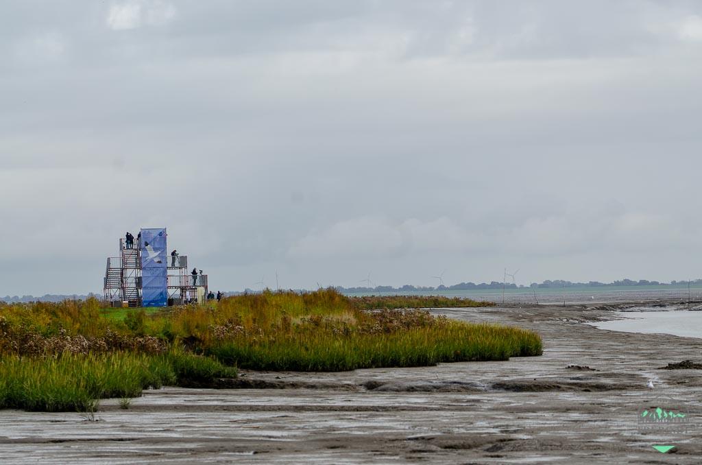 Zugvogeltage im Nationalpark Niedersächsisches Wattenmeer - der Vogelturm am Varreler Watt