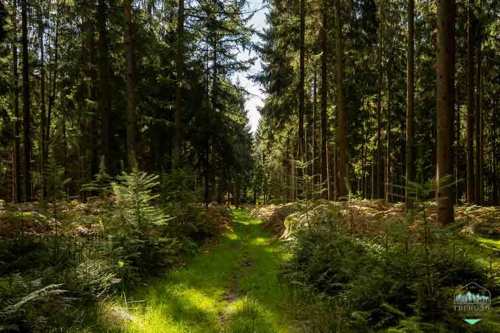 Mühlenidylle am Nordpfad Federlohmühlen - durch Wälder
